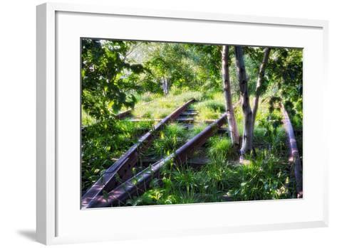 Birch Trees Of High Line Park, New York City-George Oze-Framed Art Print