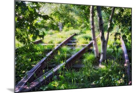 Birch Trees Of High Line Park, New York City-George Oze-Mounted Photographic Print
