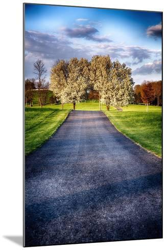 Country Road With Blooming Trees, New Jersey-George Oze-Mounted Photographic Print