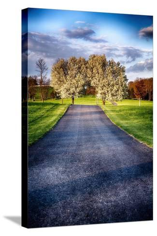 Country Road With Blooming Trees, New Jersey-George Oze-Stretched Canvas Print