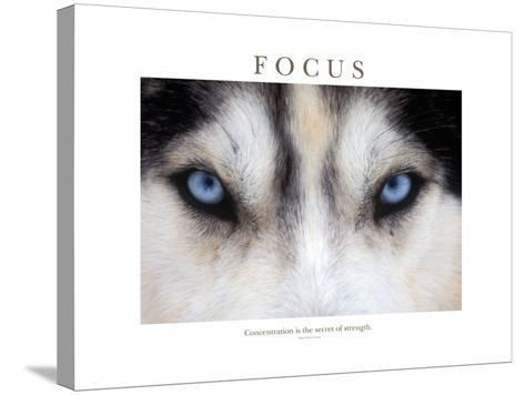 Focus - Concentration Is The Secret Of Strength-Brian Horisk-Stretched Canvas Print