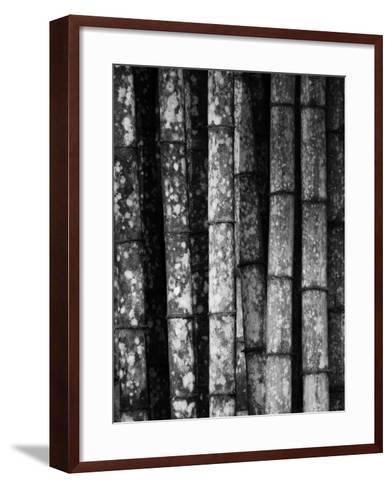 Bamboo-John Gusky-Framed Art Print