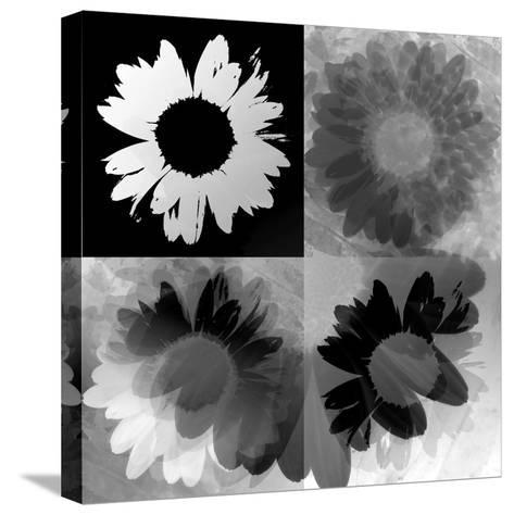 Daisies In Black And White-Ruth Palmer-Stretched Canvas Print