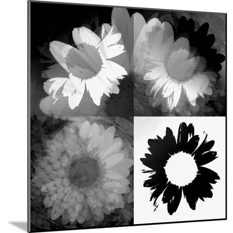 Daisies In Black And White II-Ruth Palmer-Mounted Art Print