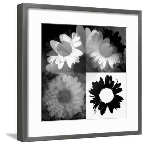 Daisies In Black And White II-Ruth Palmer-Framed Art Print