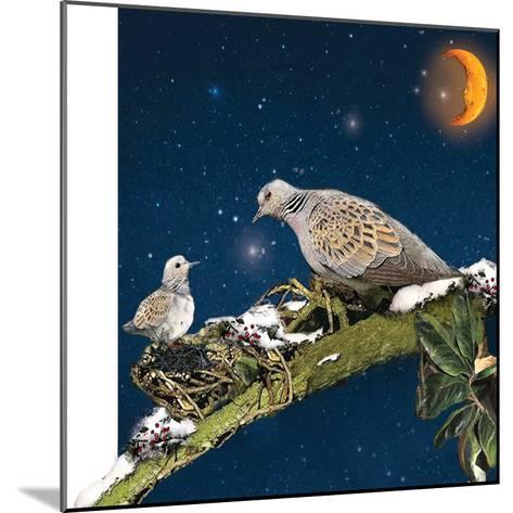 Sleepy Turtledove-Nancy Tillman-Mounted Art Print