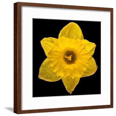 This Yellow Daffodil-Steve Gadomski-Framed Art Print