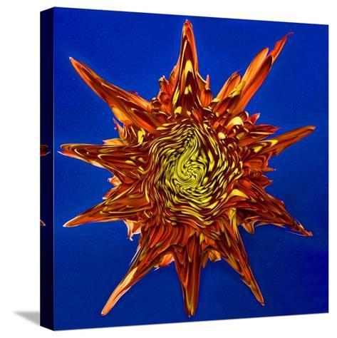 Chrysanthemum Explosion-Charles Bowman-Stretched Canvas Print