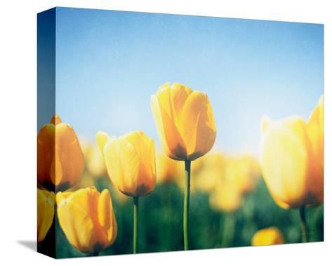 Sunny Blooms III-Elizabeth Urquhart-Stretched Canvas Print