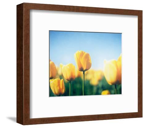 Sunny Blooms III-Elizabeth Urquhart-Framed Art Print