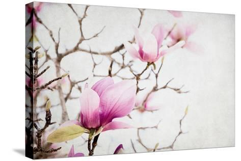 Spring is In the Air I-Elizabeth Urquhart-Stretched Canvas Print
