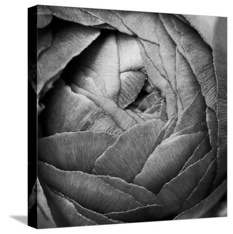 Ranunculus Abstract III BW-Laura Marshall-Stretched Canvas Print