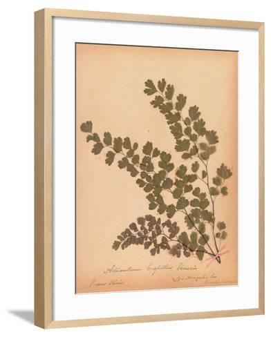 Botanical Fern III-Wild Apple Portfolio-Framed Art Print