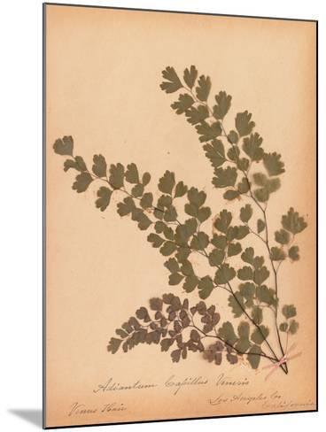 Botanical Fern III-Wild Apple Portfolio-Mounted Art Print