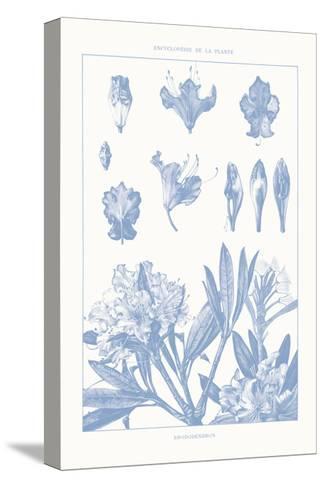 Serenity Rhododendron on White-Wild Apple Portfolio-Stretched Canvas Print