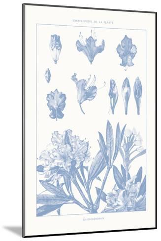 Serenity Rhododendron on White-Wild Apple Portfolio-Mounted Art Print