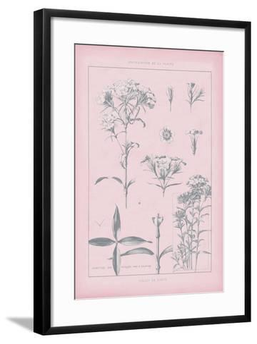 Rose Quartz Phlox-Wild Apple Portfolio-Framed Art Print