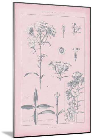 Rose Quartz Phlox-Wild Apple Portfolio-Mounted Art Print