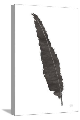 Black Feather VI-Chris Paschke-Stretched Canvas Print