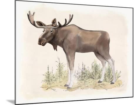 Wilderness Collection Moose-Beth Grove-Mounted Art Print