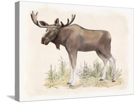 Wilderness Collection Moose-Beth Grove-Stretched Canvas Print