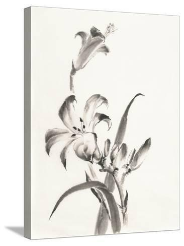 Sumi Daylily II-Chris Paschke-Stretched Canvas Print