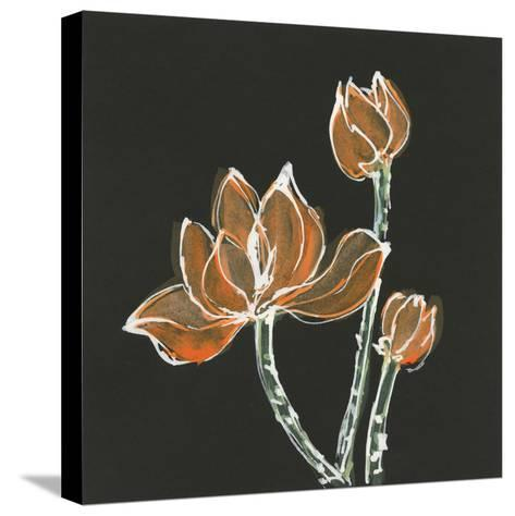 Lotus on Black IV-Chris Paschke-Stretched Canvas Print