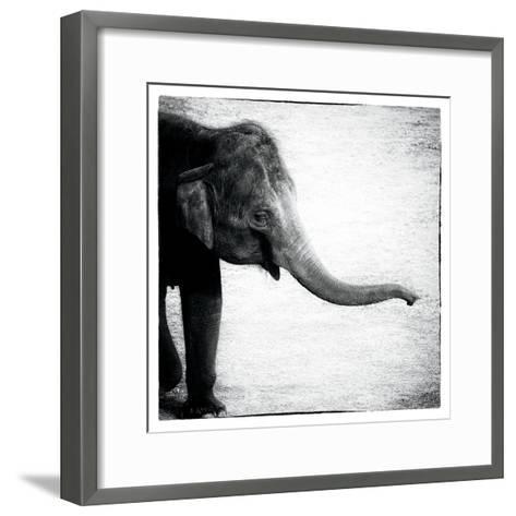 Elephant II-Debra Van Swearingen-Framed Art Print