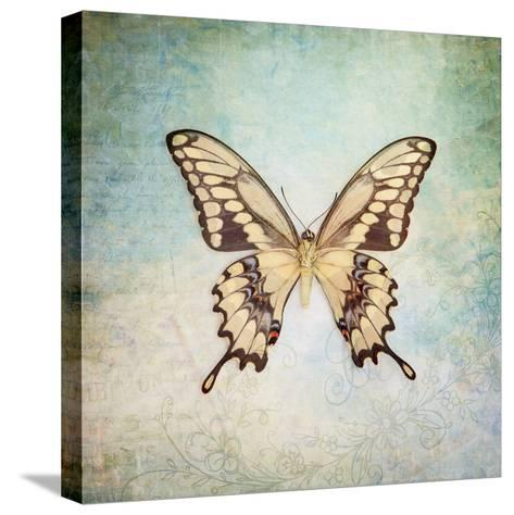 French Butterfly VI-Debra Van Swearingen-Stretched Canvas Print
