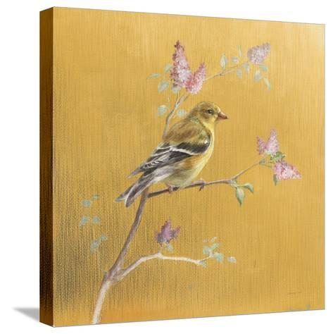 Female Goldfinch on Gold-Danhui Nai-Stretched Canvas Print