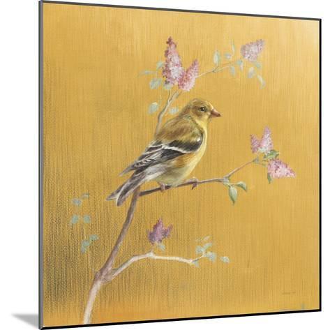 Female Goldfinch on Gold-Danhui Nai-Mounted Art Print
