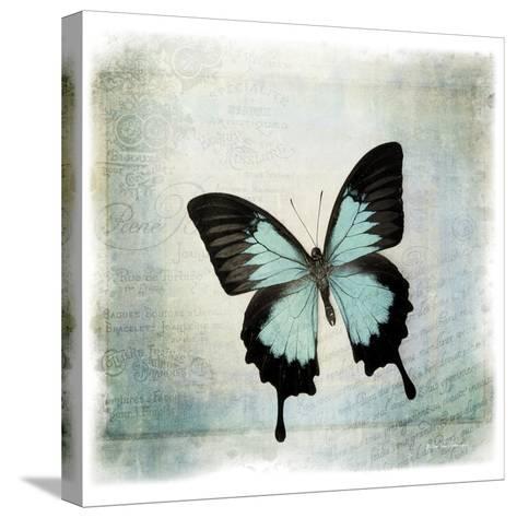 Floating Butterfly III-Debra Van Swearingen-Stretched Canvas Print