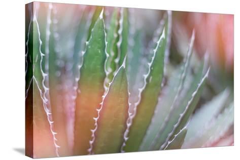 Dream Desert III-Sue Schlabach-Stretched Canvas Print