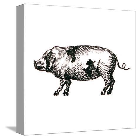 Farm Animal Icons II-Sue Schlabach-Stretched Canvas Print