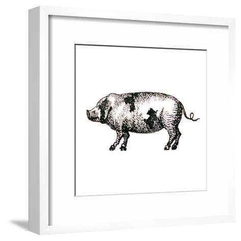 Farm Animal Icons II-Sue Schlabach-Framed Art Print
