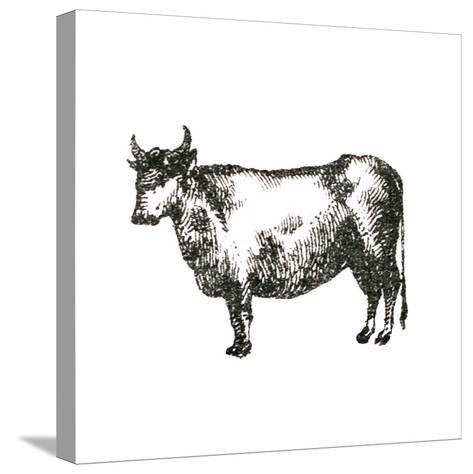 Farm Animal Icons IV-Sue Schlabach-Stretched Canvas Print