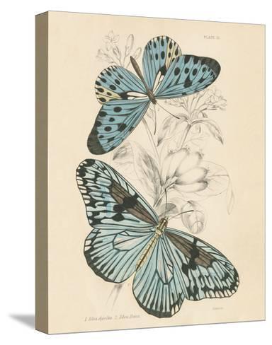 Assortment Butterflies II-Wild Apple Portfolio-Stretched Canvas Print