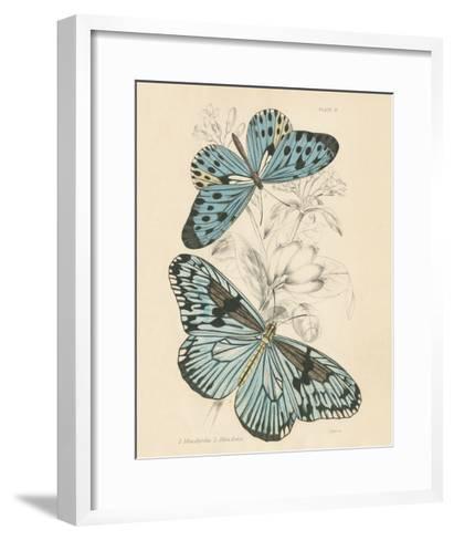 Assortment Butterflies II-Wild Apple Portfolio-Framed Art Print