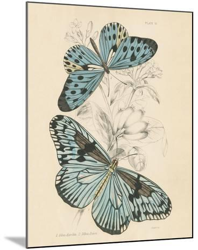 Assortment Butterflies II-Wild Apple Portfolio-Mounted Art Print