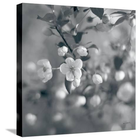 Blush Blossoms I Square BW-Sue Schlabach-Stretched Canvas Print