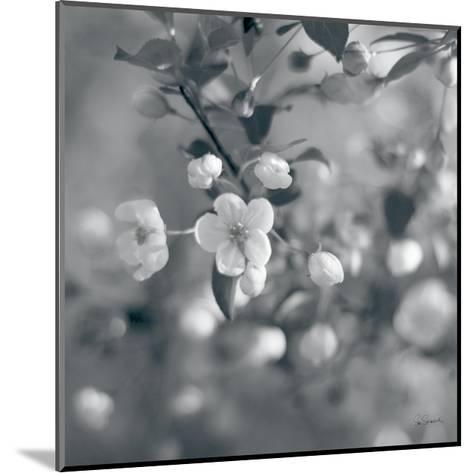 Blush Blossoms I Square BW-Sue Schlabach-Mounted Art Print