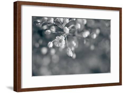 Blush Blossoms II BW-Sue Schlabach-Framed Art Print