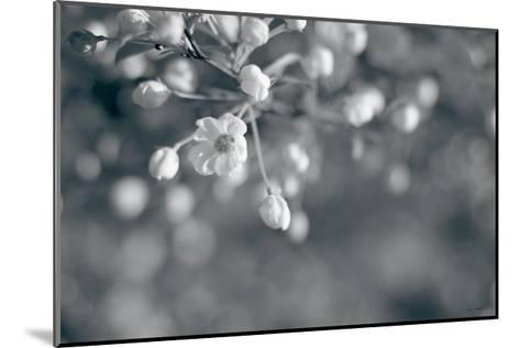 Blush Blossoms II BW-Sue Schlabach-Mounted Art Print