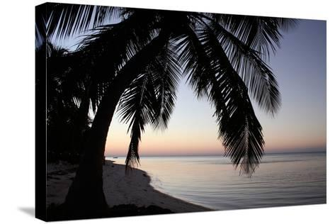 Palm Tree Sunset-Brent Anderson-Stretched Canvas Print