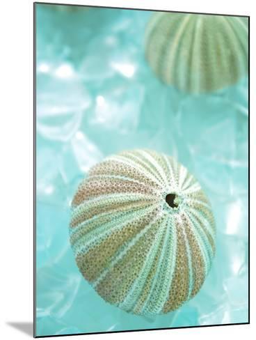 Seaglass 4-Alan Blaustein-Mounted Photographic Print
