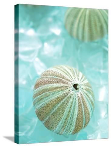 Seaglass 4-Alan Blaustein-Stretched Canvas Print