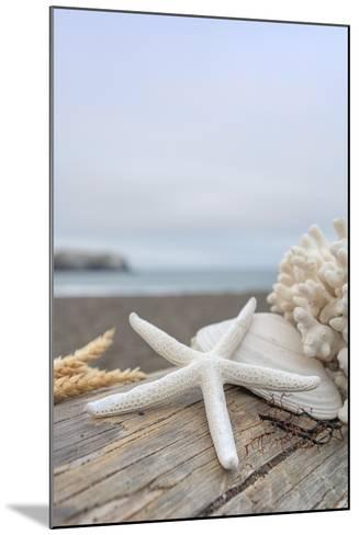 Crescent Beach Shells 14-Alan Blaustein-Mounted Photographic Print