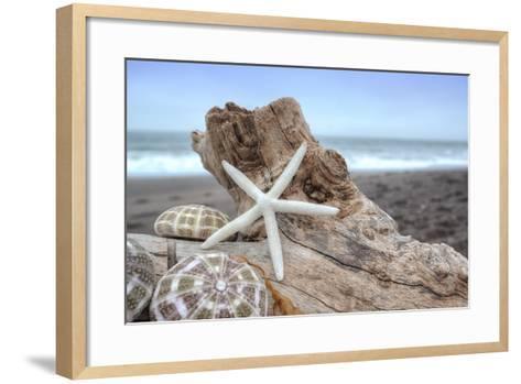 Crescent Beach Shells 6-Alan Blaustein-Framed Art Print