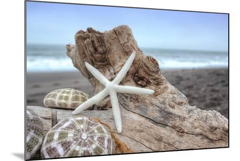 Crescent Beach Shells 6-Alan Blaustein-Mounted Photographic Print