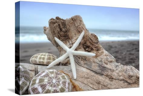 Crescent Beach Shells 6-Alan Blaustein-Stretched Canvas Print